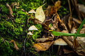 Beautiful mushrooms in the forest. Selective focus. Shallow depth of field.