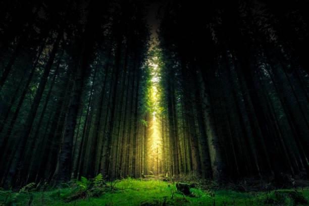 güzel mistik orman ve güneş - fantezi ahşap - peri hayali karakter stok fotoğraflar ve resimler