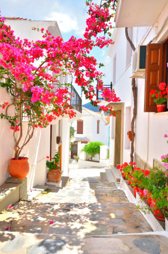 istock Beautiful narrow street with bougainvillea in full blossom, Skopelos, Greece 484742253