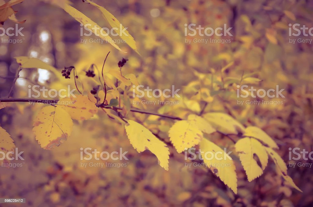 Beautiful natural autumn tree background. retro photo in yellow colours foto royalty-free