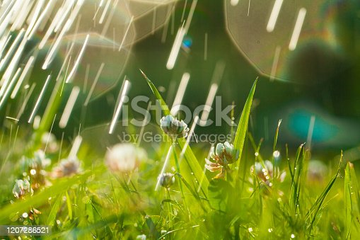Beautiful natural background with clover, sun and raindrops. Art Magical summer landscape with bokeh