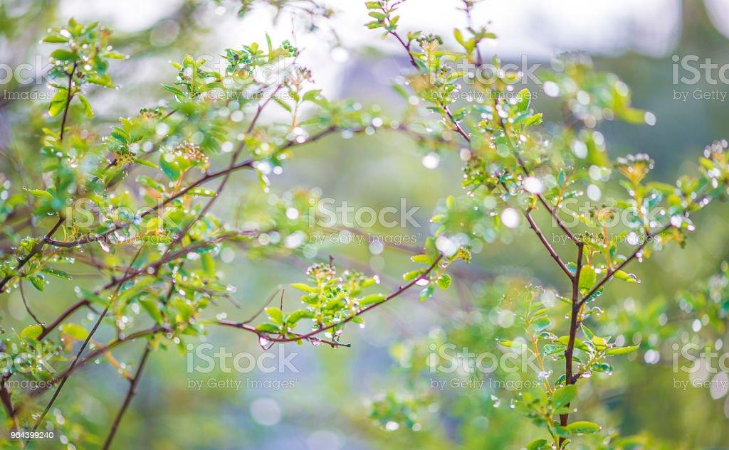 Fundo natural bonito com plantas com pingos de chuva dia de sol - Foto de stock de Azul royalty-free