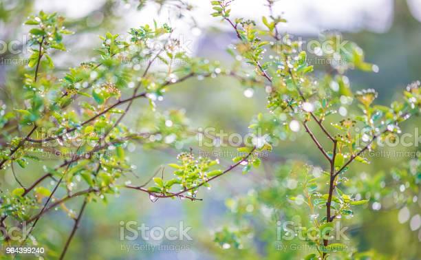 Foto de Fundo Natural Bonito Com Plantas Com Pingos De Chuva Dia De Sol e mais fotos de stock de Azul