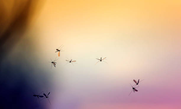 beautiful natural background with sunset and a bunch of flying mosquitoes - mosquito stock photos and pictures