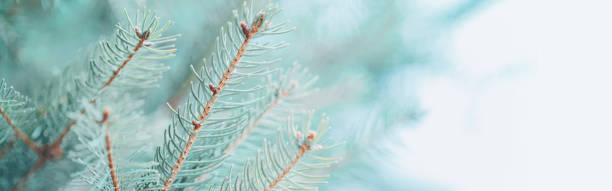 Beautiful natural spring tree background light teal green pine tree picture id1249827850?b=1&k=6&m=1249827850&s=612x612&w=0&h=kdj0l8jmkqnvgrgz0b ccjv2yf9zj8sicigez 2bbxo=