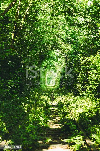 View of natural green plant tunnel of love - the old train tunnel in Western Ukraine