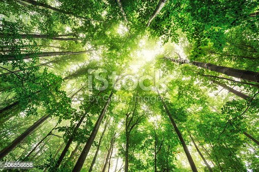 istock Beautiful nature at morning in misty spring forest with sun 506856658