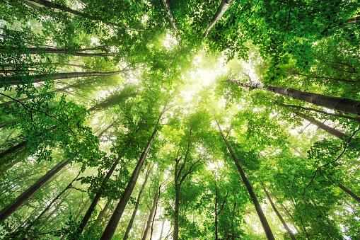 Light through trees stock photos