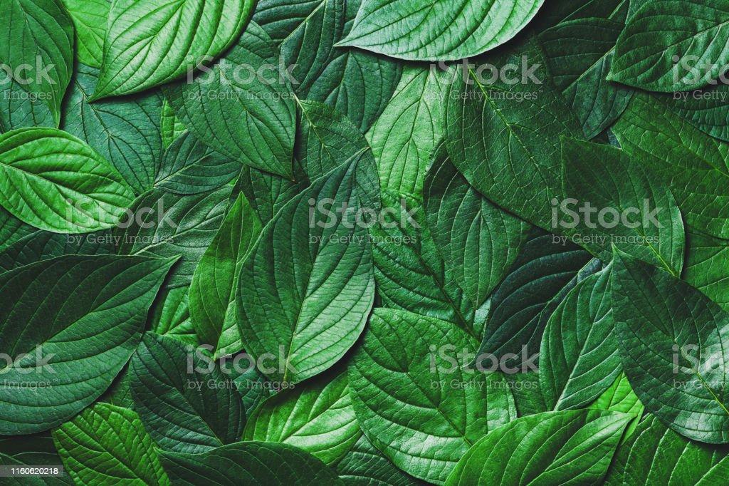Prachtige natuur achtergrond van groene bladeren met gedetailleerde textuur. Groen bovenaanzicht, close-up. - Royalty-free Abstract Stockfoto