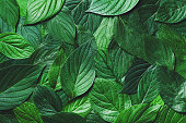 Beautiful nature background from green leaves with detailed texture. Greenery top view, closeup.