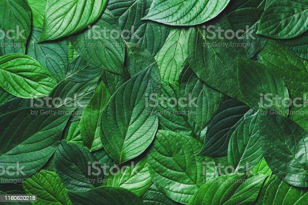 Photo of Beautiful nature background from green leaves with detailed texture. Greenery top view, closeup.