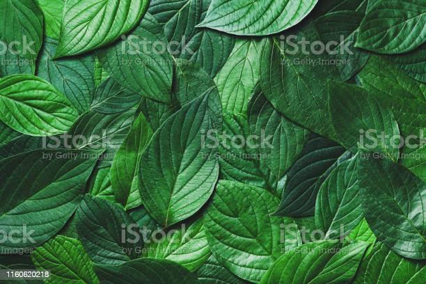 Prachtige Natuur Achtergrond Van Groene Bladeren Met Gedetailleerde Textuur Groen Bovenaanzicht Closeup Stockfoto en meer beelden van Abstract