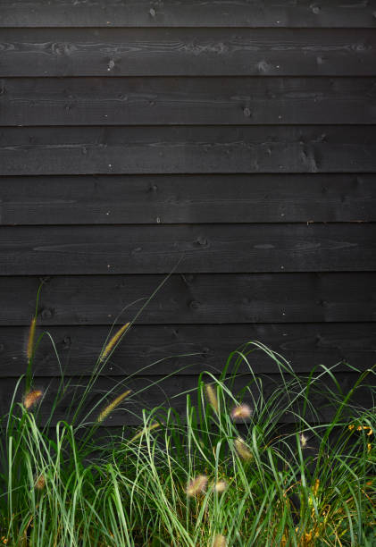 Beautiful nature background green grass against black wooden wall with horizontal planks template stock photo