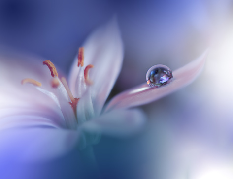 Beautiful Nature Background.Macro Shot of Amazing Spring Flowers.Art Design.Close up Photography.Conceptual Abstract Photo.Fantasy Floral Art.Creative Artistic Wallpaper.Blue Color.White Daisy.Colorful,colors,plant.Water drop.Romantic,love.