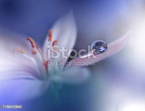 istock Beautiful Nature Background.Macro Shot of Amazing Spring Flowers.Art Design.Close up Photography.Conceptual Abstract Photo.Fantasy Floral Art.Creative Artistic Wallpaper.Blue Color.White Daisy.Colorful,colors,plant.Water drop.Romantic,love. 1150412944
