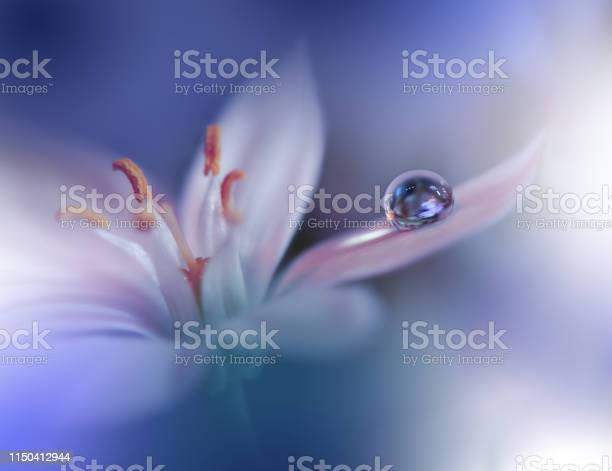 Photo of Beautiful Nature Background.Macro Shot of Amazing Spring Flowers.Art Design.Close up Photography.Conceptual Abstract Photo.Fantasy Floral Art.Creative Artistic Wallpaper.Blue Color.White Daisy.Colorful,colors,plant.Water drop.Romantic,love.