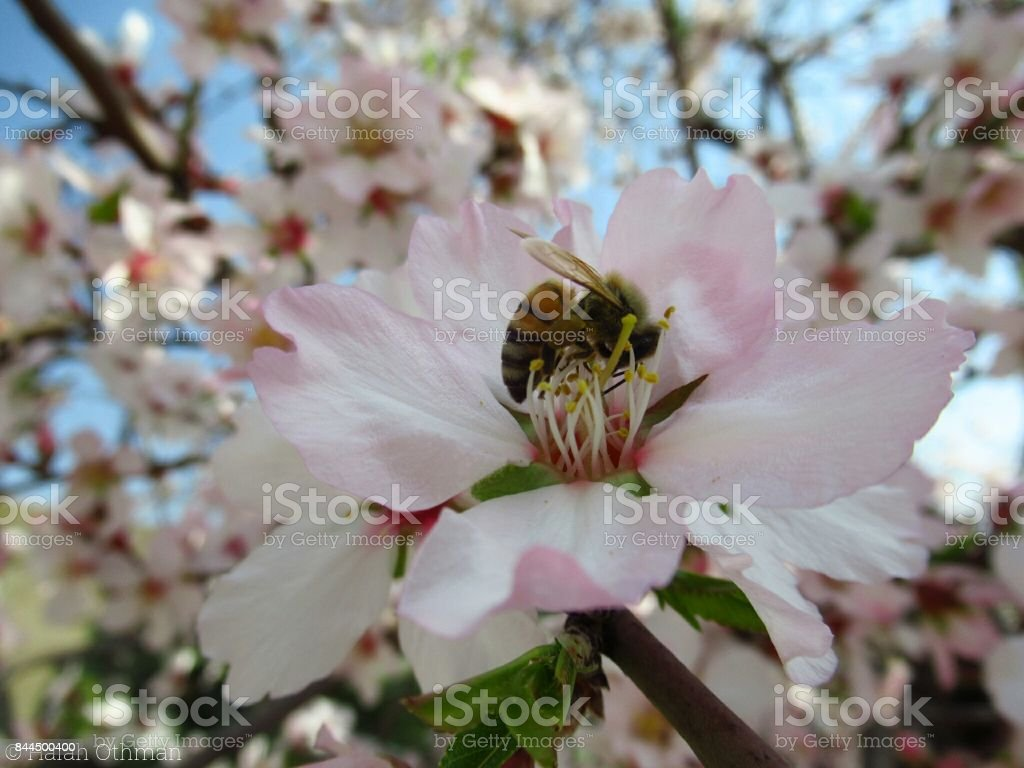 Beautiful Nature Correlation stock photo