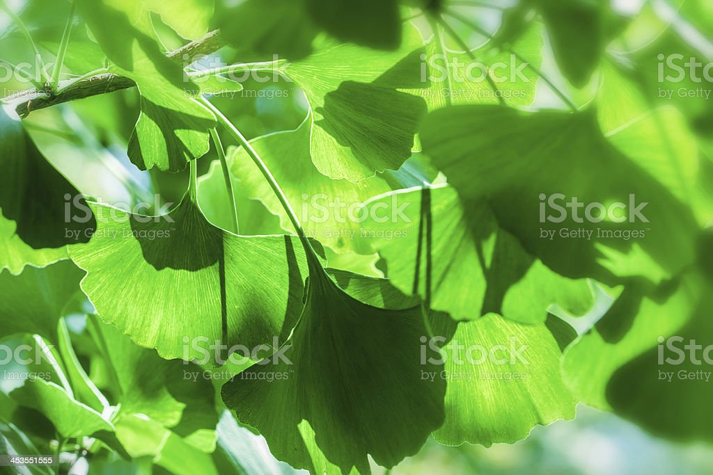 Beautiful nature - Herb leaves royalty-free stock photo