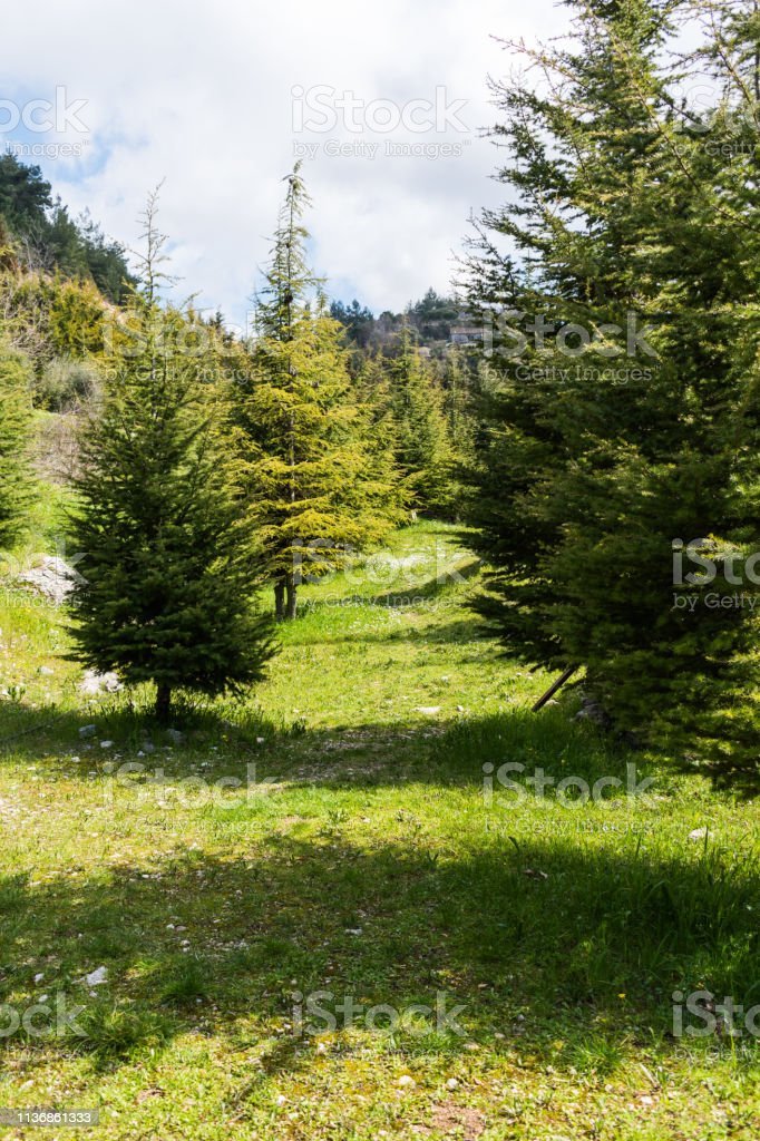 Beautiful Nature In North Lebanon Stock Photo Download Image Now Istock