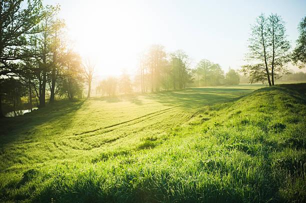 bellissima natura - prateria campo foto e immagini stock