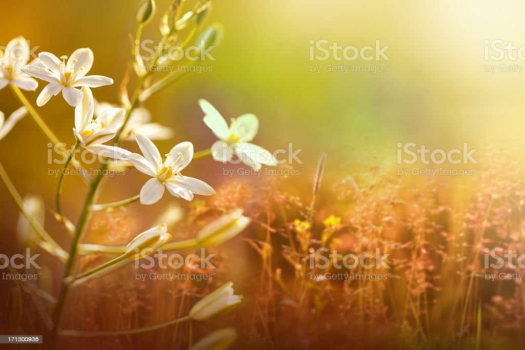 Beautiful nature stock photo