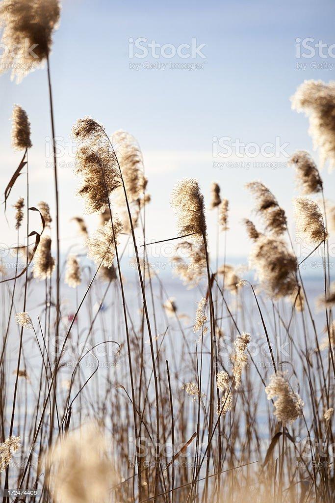 Beautiful nature royalty-free stock photo