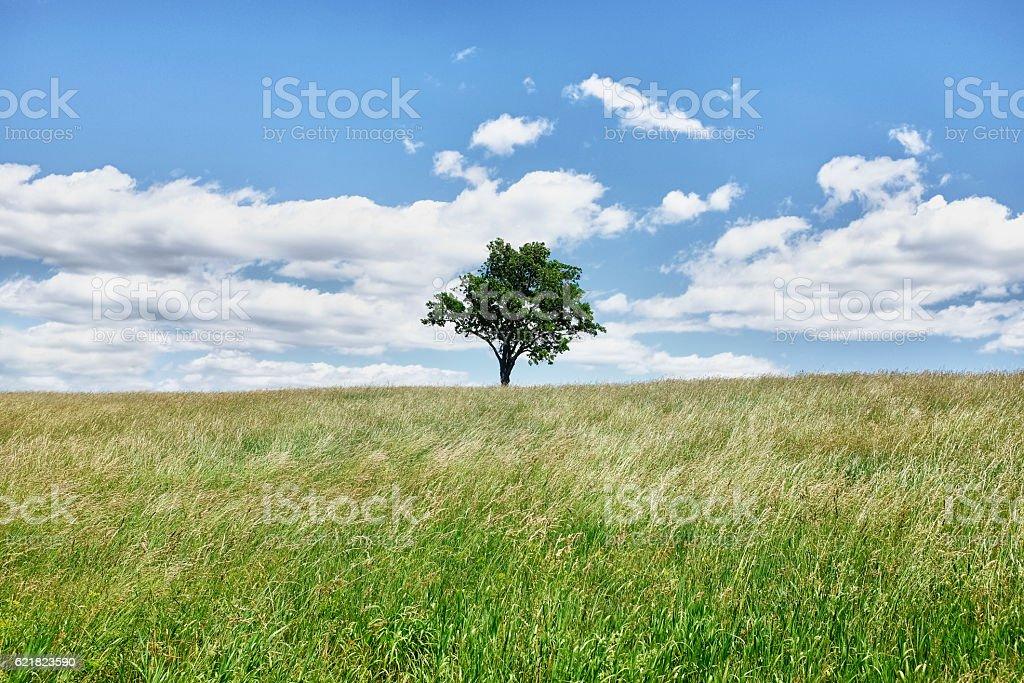 Bellissima natura  - foto stock