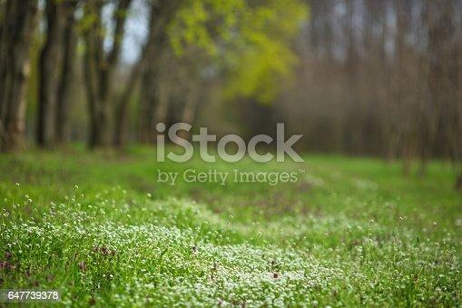 Green spring defocused background.
