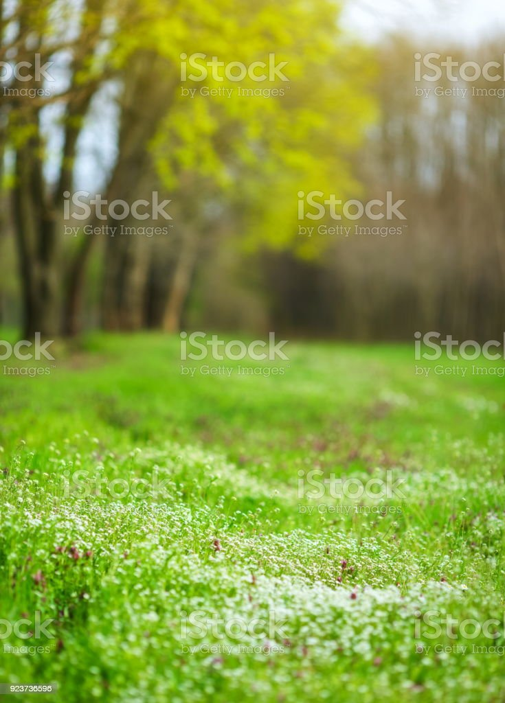 Beautiful Nature Stock Photo - Download Image Now - iStock