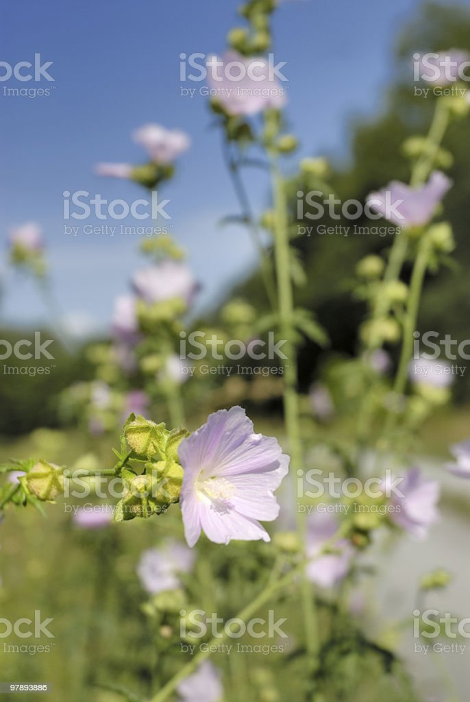 beautiful nature royalty-free stock photo