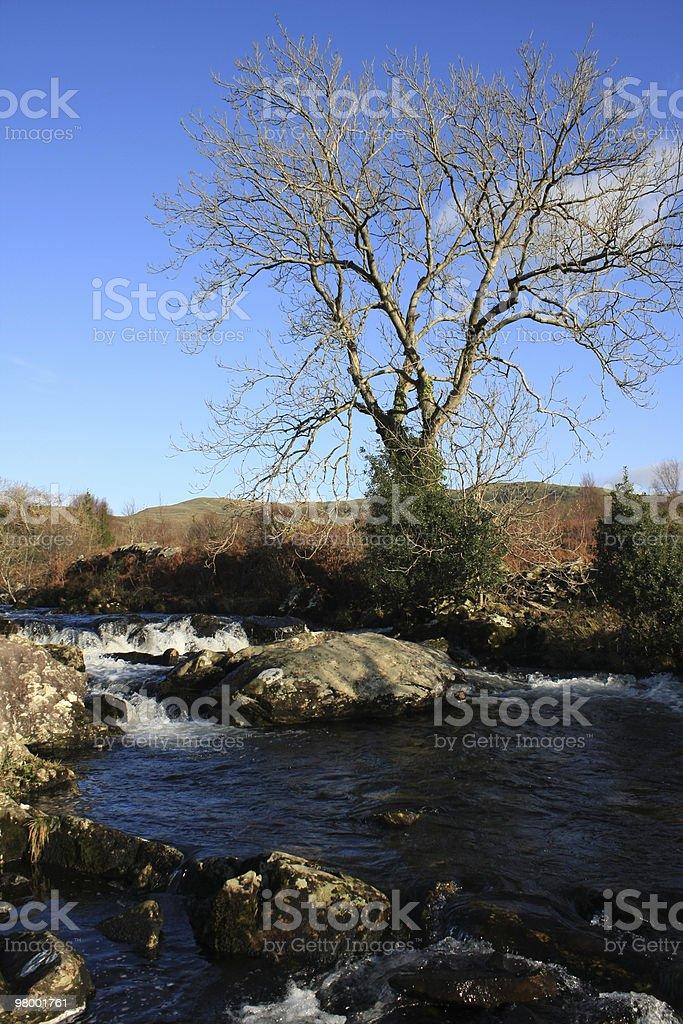 Beautiful Nature royalty free stockfoto
