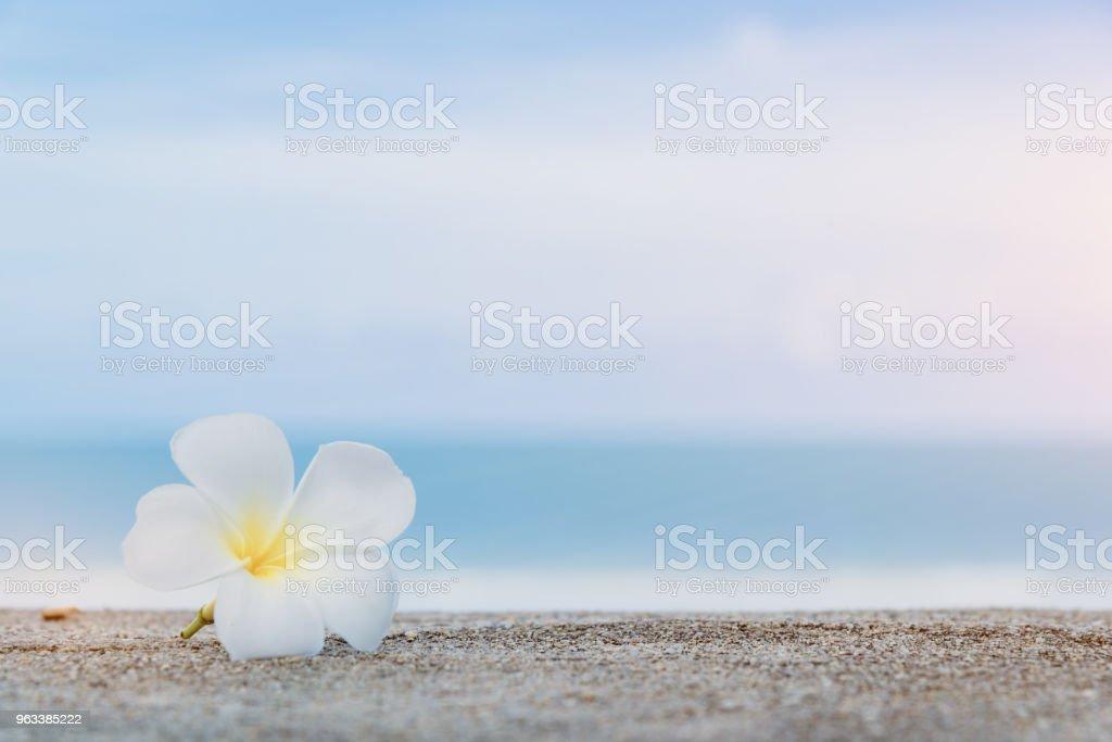 Vacker natur havet sommaren bakgrund - Royaltyfri April Bildbanksbilder
