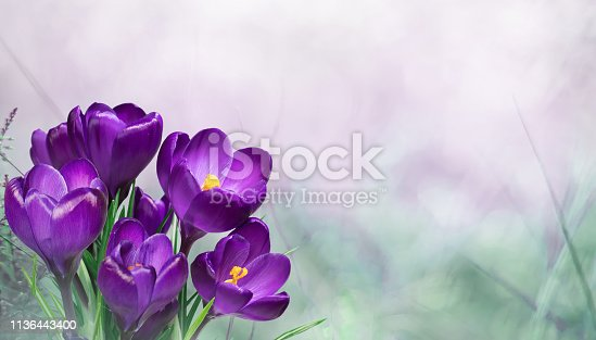 istock Beautiful Nature Spring Floral Background 1136443400