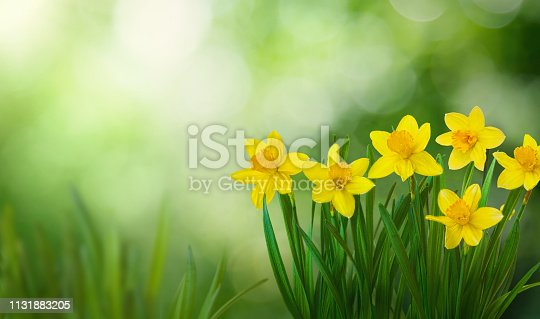 639245704 istock photo Beautiful Nature Spring flowers Background 1131883205