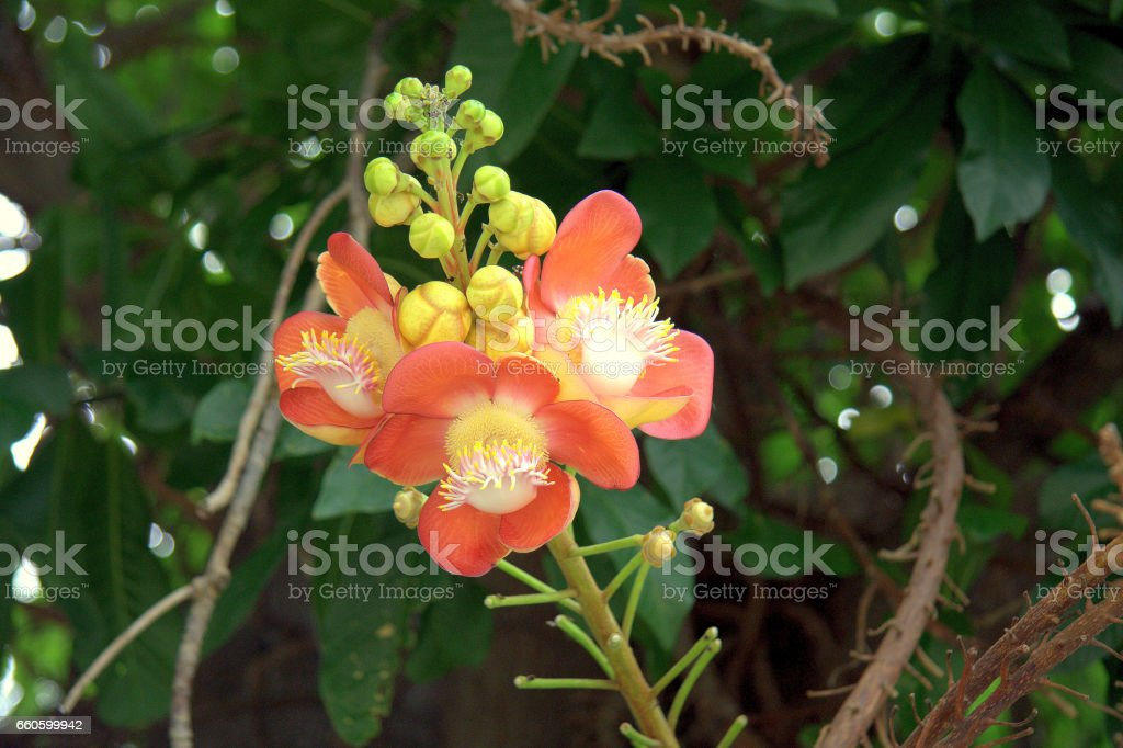 Beautiful Naure of flowers and fruits royalty-free stock photo