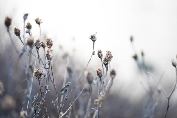 Schönen neutralen Hintergrund von getrockneten Blumen in kühlen Tönen – Foto