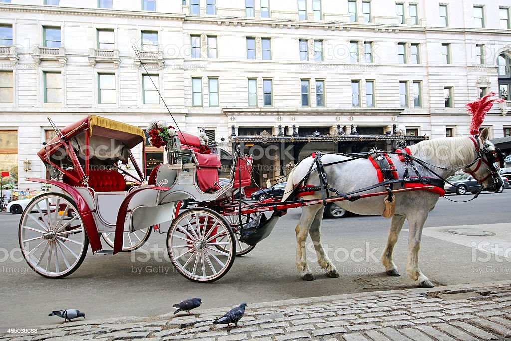 Beautiful NEW NYC White Horse Imagery stock photo