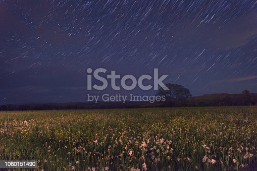 Beautiful night in the flowering valley, scenic landscape with wild growing flowers and blue starry sky, star trails. Daffodil valley, nature reserve near Khust, Transcarpathia, Ukraine