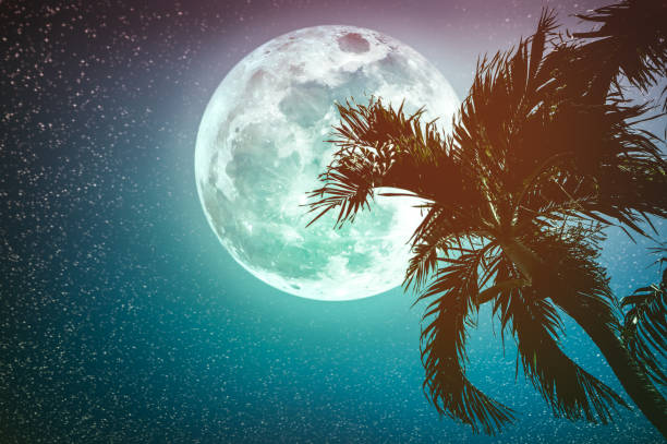 Beautiful night landscape of sky with supermoon behind betel palm tree. stock photo