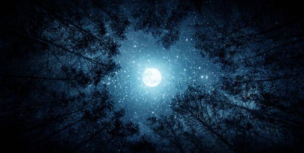 beautiful night sky, the milky way, moon and the trees. - céu a noite imagens e fotografias de stock