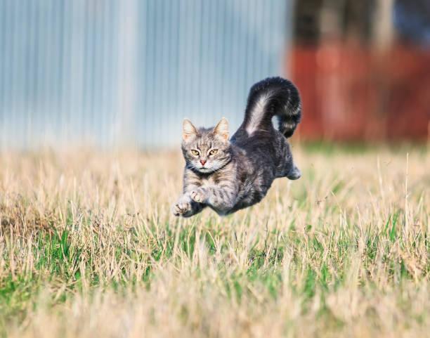 Beautiful nimble cat fun neck on miss glade highly podbrosiv their picture id955959698?b=1&k=6&m=955959698&s=612x612&w=0&h=a8g2acg  lmj hfglatozwmb8vj0pptdgsbd guy3cy=