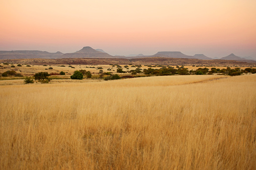 This is a landscape image of African savannah and a mountain range in Northern Namibia, close to Palmwag. This African landscape has beautiful colors at sunset. There are no people or animals in this image.