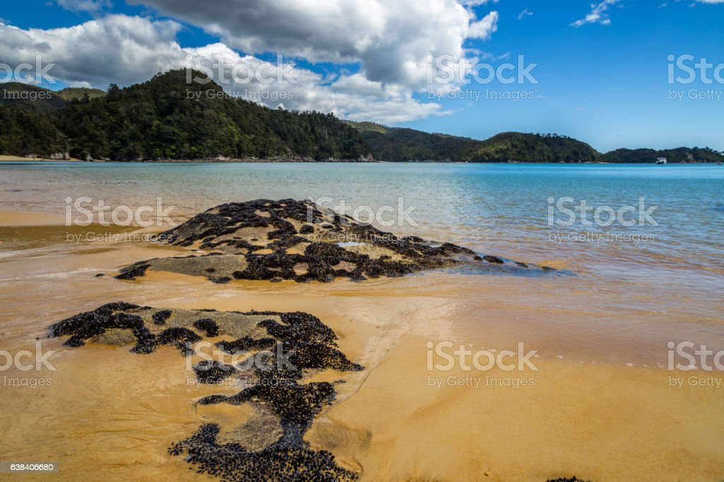 Beautiful ocean landscape with rocks covered in black mollusks stock photo
