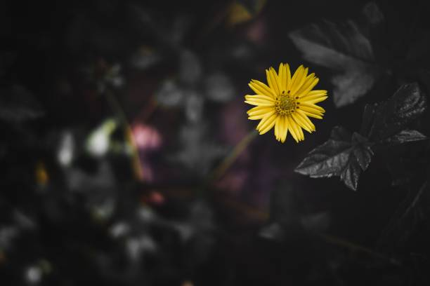 Linda de flor amarela - foto de acervo