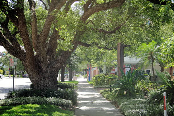 beautiful old oak in quiet suburban street - suburban street stock photos and pictures