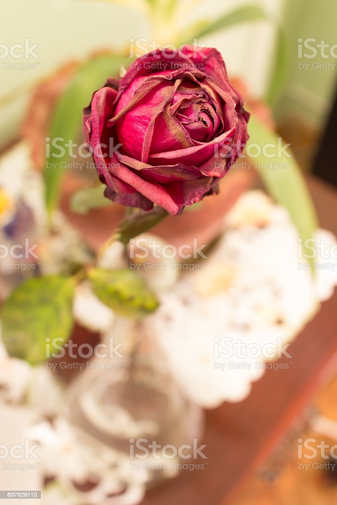 Beautiful Old roses stock photo