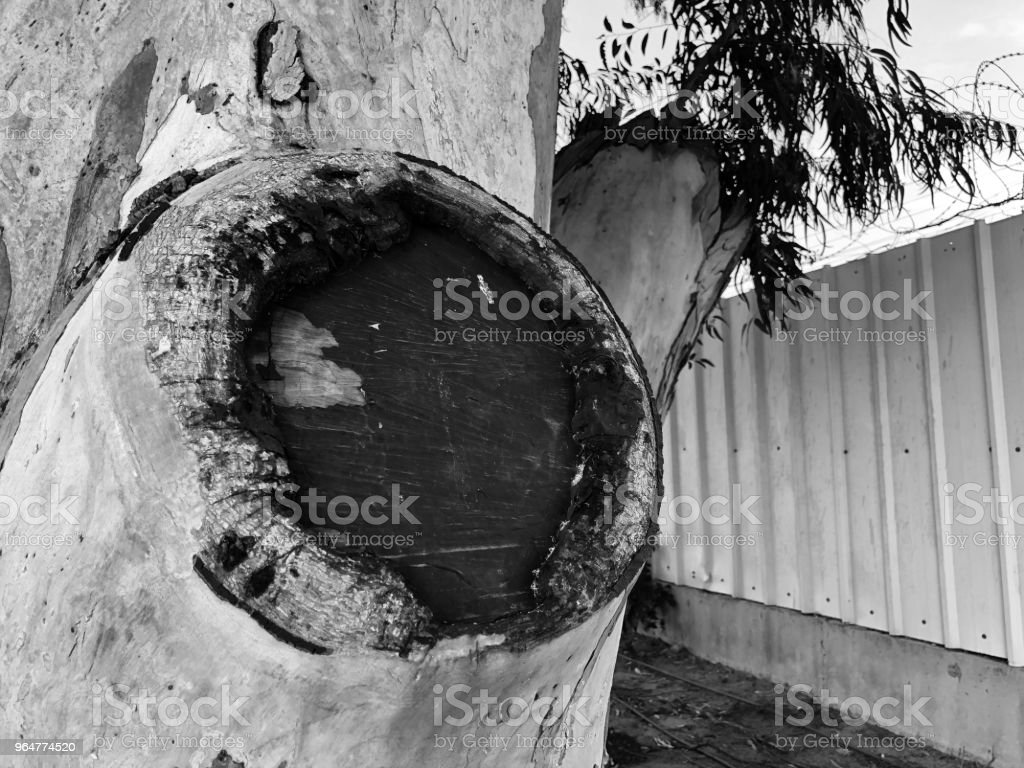 Beautiful old tree in the park. Texture background close up view royalty-free stock photo