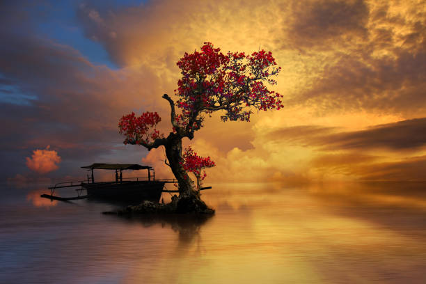 Beautiful old tree with dramatic golden sky stock photo