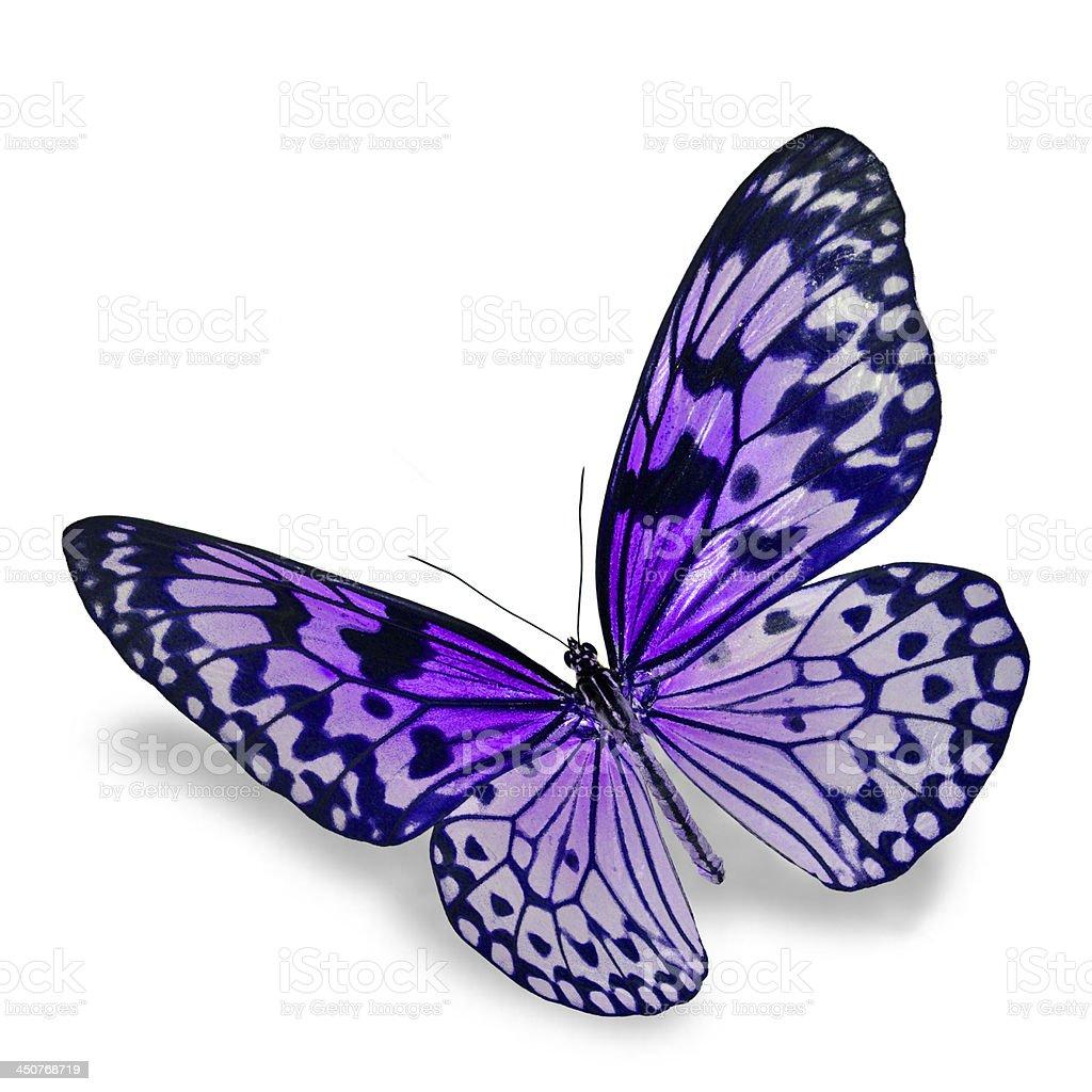 Beautiful open winged purple patterned butterfly royalty-free stock photo
