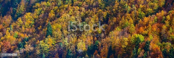istock Beautiful orange and yellow autumn forest 1151994255